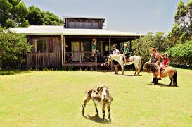Free pony rides for children each morning
